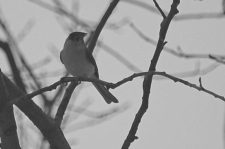 bw-bird