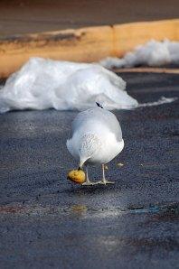 silly-bird-1