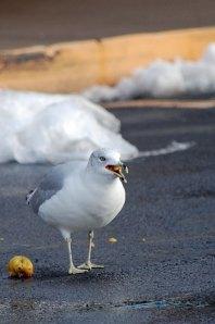 silly-bird-2