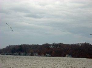lake-gulls