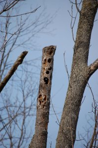 holey-tree