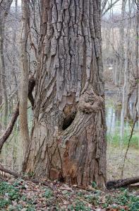 holey-tree1