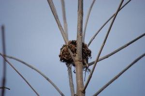 nest-11