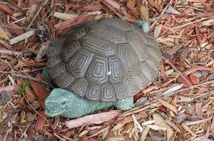 1-turtle