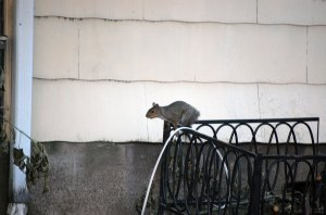 silly-squirrel