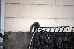 stealthy-squirrel