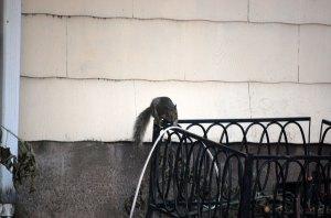 stealthy-squirrel